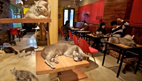 12 самых необычных кафе