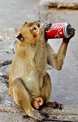 16 необычных фактов о Coca-Cola