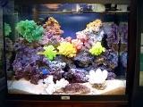 Бизнес на продаже живых кораллов