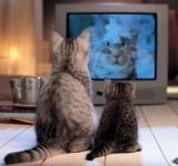 Психологическое воздействие рекламы на потребителей